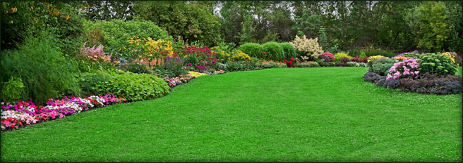 Turfgrass Installation Landscaping Irrigation San Antonio San